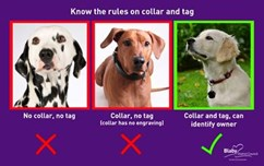 Collar and tag fines given